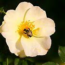 Bee & Rose by debfaraday