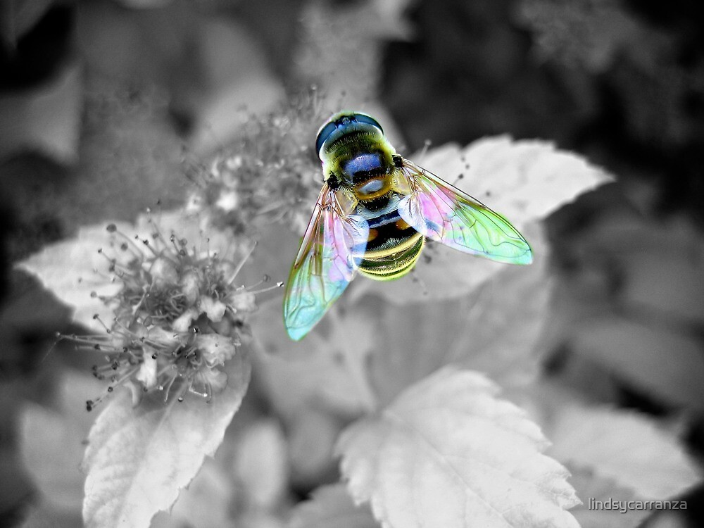 Colorful Wings 2 by lindsycarranza