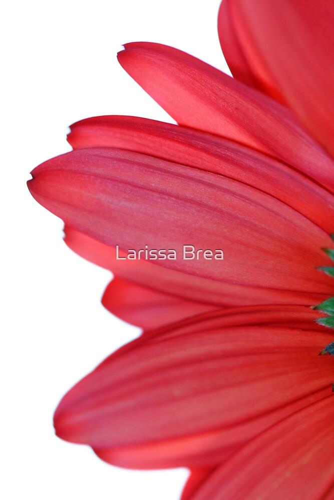Petals from heaven by Larissa Brea
