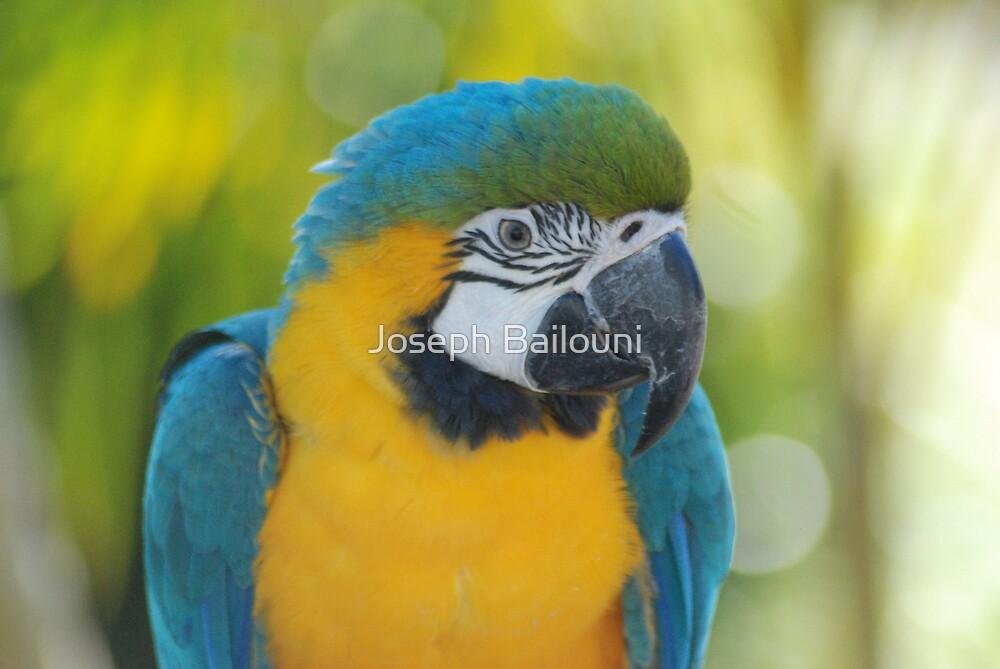 Parrot by Joseph Bailouni