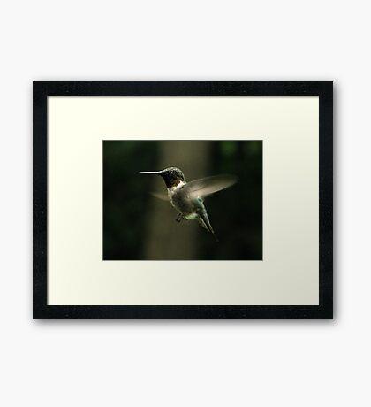 Hummingbird Posing Framed Print