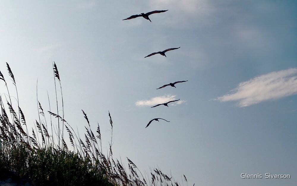 Pelicans in Flight by Glennis  Siverson