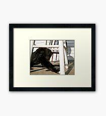 Mary Jane Framed Print