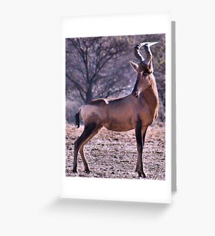 RED HARTEBEEST - Alcelaphus buselaphus Greeting Card