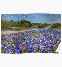 Texas Wildflowers Images - Bluebonnets 2 Poster