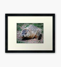Chuck, the Groundhog Framed Print