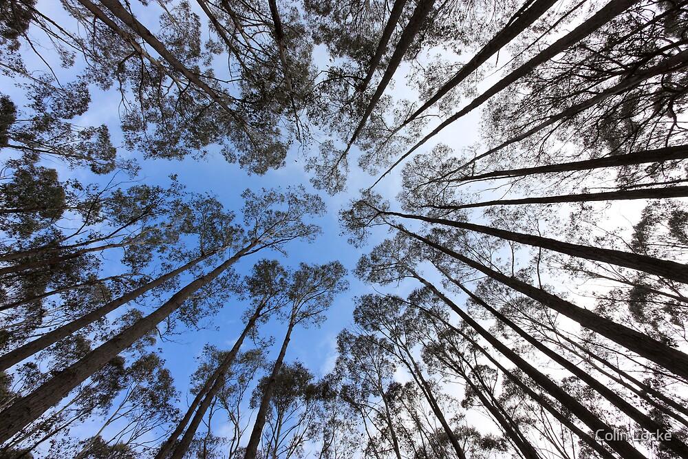 Reach for the Sky by Colin Locke