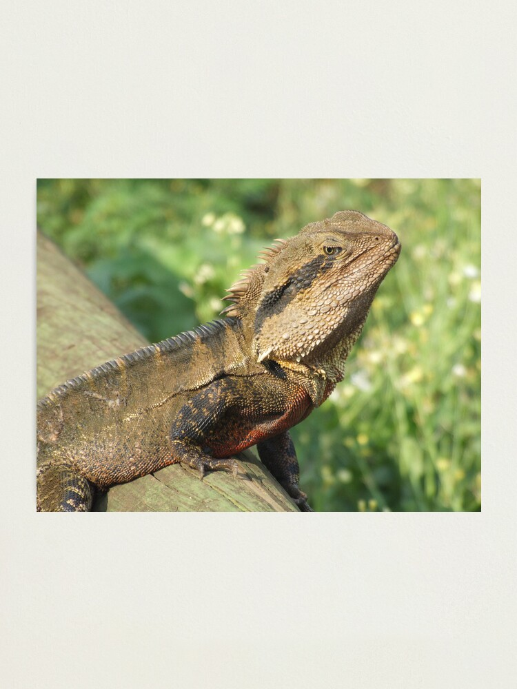 Alternate view of Water Dragon Photographic Print
