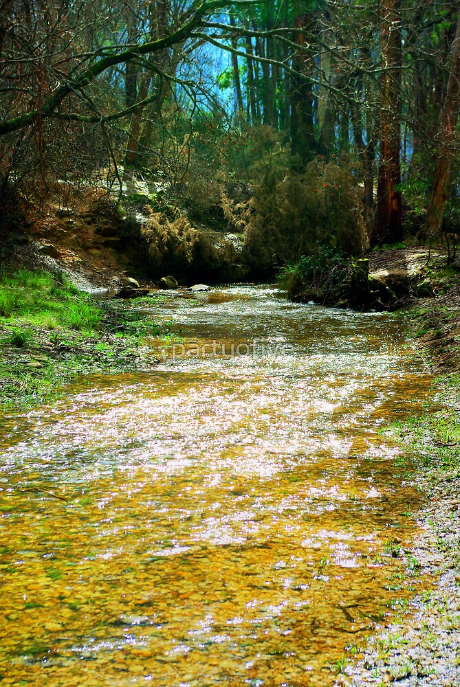 country stream.. by partyofive