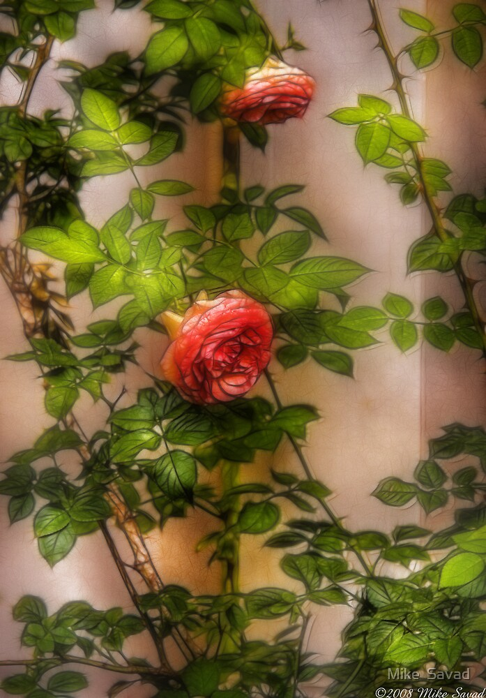 Rose by Michael Savad
