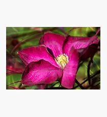 Clematis blossom Photographic Print