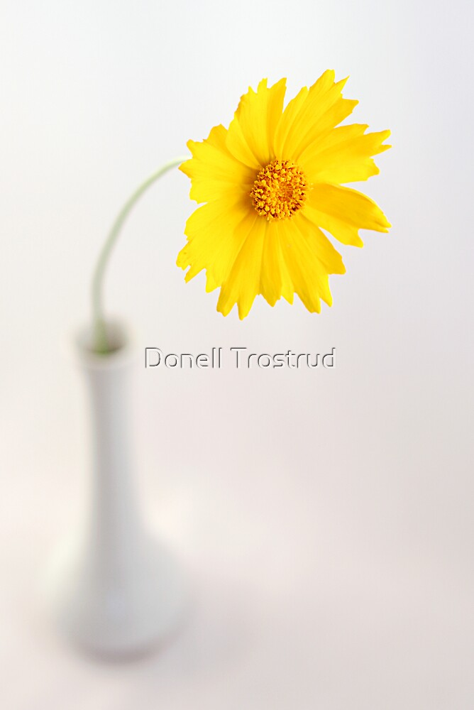 Yellow Faced by Donell Trostrud