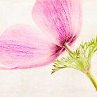 Leinen In Pink von Caitlyn Grasso