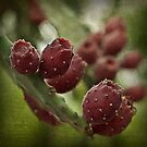 prickly pear by scottimages