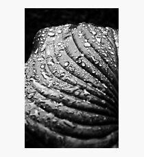 Spring Hostas #2 Photographic Print