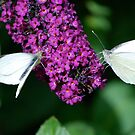 Two Small Whites by dougie1