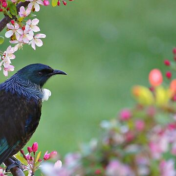 Tui in the Crabapple by curiouskiwi