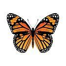 Monarch Butterfly   Vintage Butterflies    by EclecticAtHeART