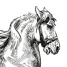 Vintage Horse   Horse's Head   Black and White    by EclecticAtHeART