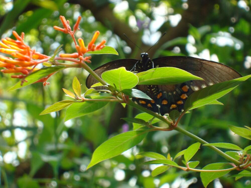 butterfly by kayoh13