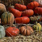 Gourds & Pumpkins _ harvest time! by Poete100