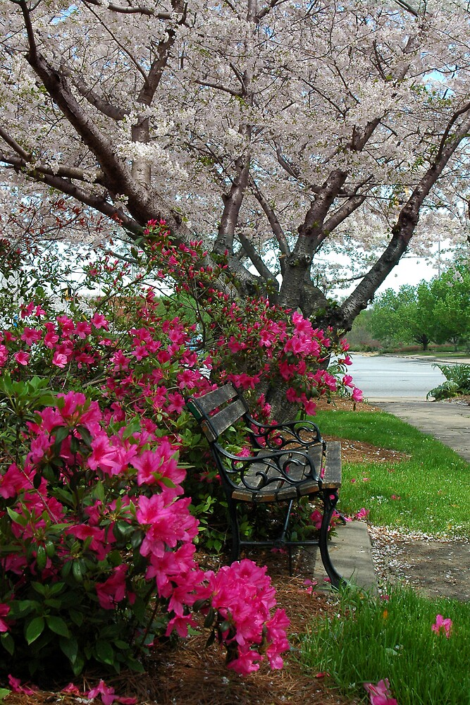 Park Bench by Glenn Grossman