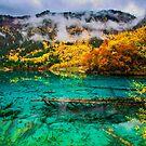 Five Flower Lake, JiuZhaiGou, China by Daniel H Chui