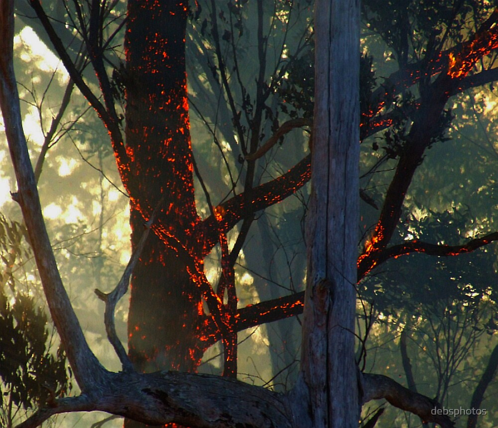 """Burning Bark"" by debsphotos"