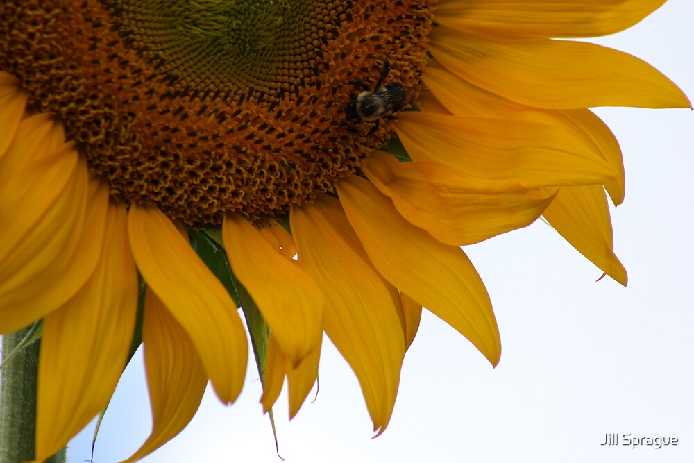 Bee In My Bonnet by Jill Sprague