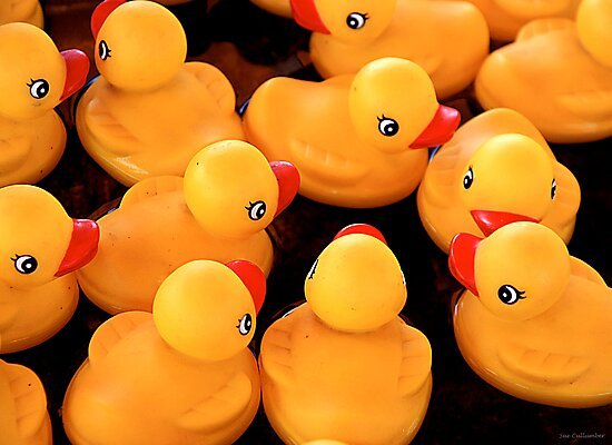 Rubber Duckys by Sue  Cullumber