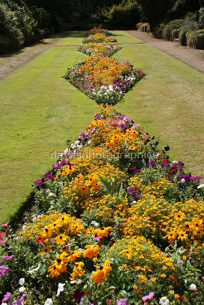 Flower Beds by davesphotographics