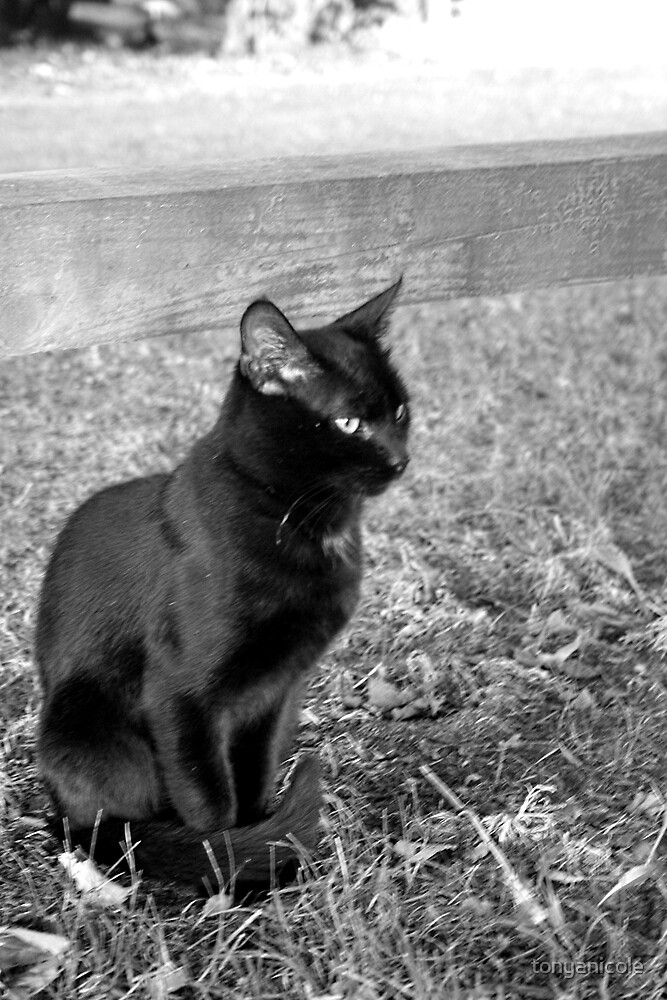 That Damn Cat 2 by tonyanicole