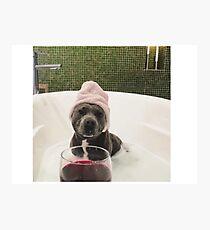 Wine Dog Photographic Print
