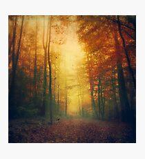 Autumn Morming Photographic Print