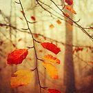 Autumn Leaves by Dirk Wuestenhagen