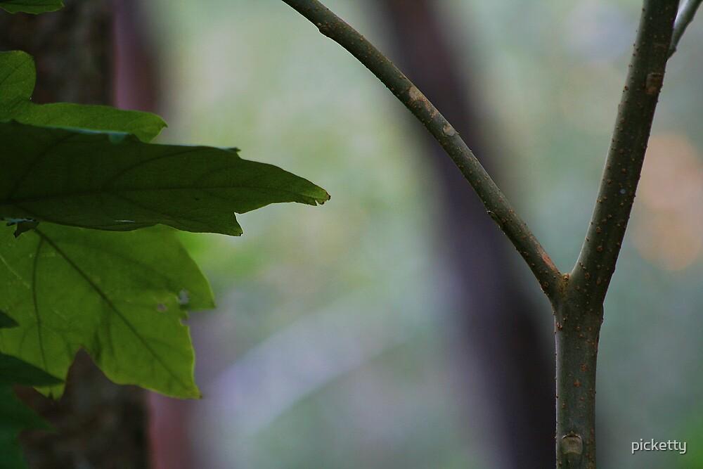 leaf n twig by picketty