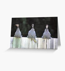 3 stooges Greeting Card