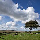 Lone tree on Bodmin Moor by peteton
