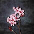 bloss by vampvamp