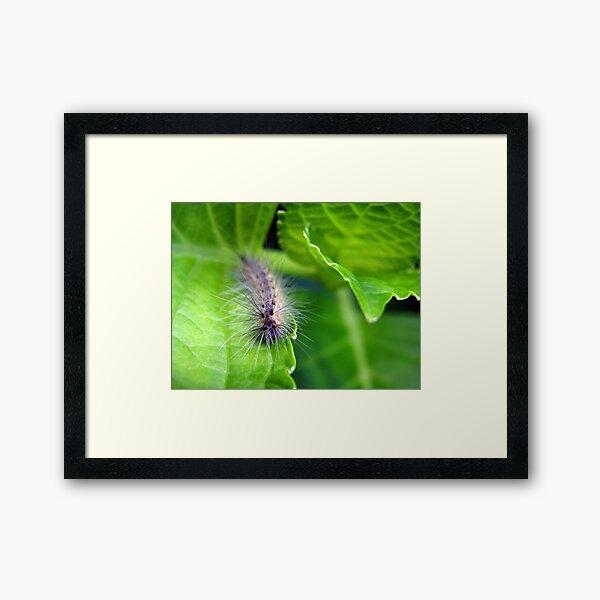 Furry Little Hydrangea Eater Framed Art Print