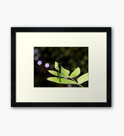 Damselfly and  Lavender Jewels Framed Print