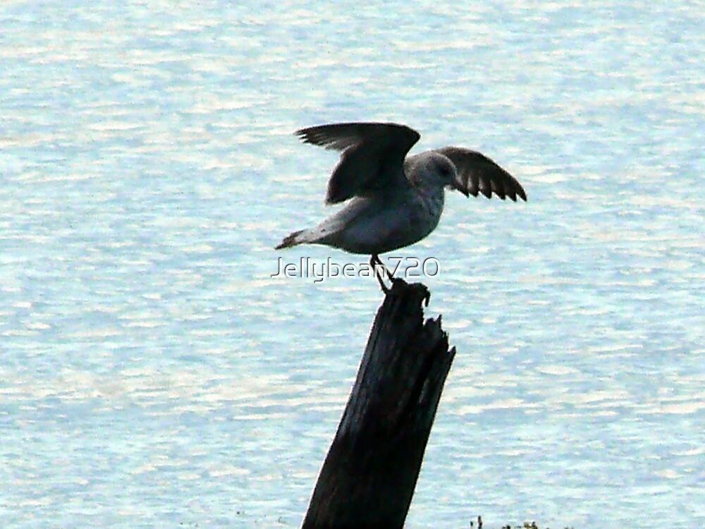 Bird in flight  by Jellybean720