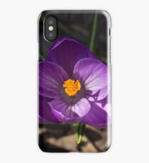 The First Crocus Celebrating Spring iPhone Case/Skin