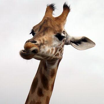Giraffe by amylw1