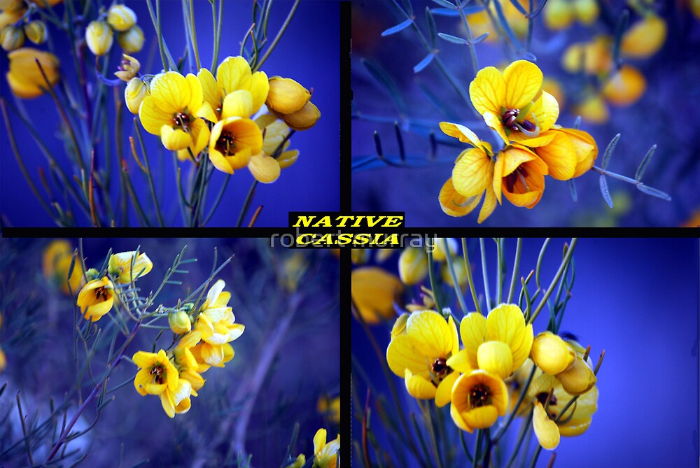 Cassia Collage,,native flower series by robert murray