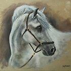 Spanish Grey, study by Stephanie Greaves