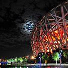 Birrd Nest Under the Moon by Chad  Walker