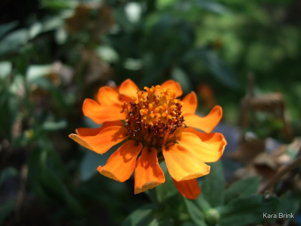 flower within a flower by Kara Brink