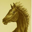 `Beauty '  Charcoal Horse Study Sketch by sharpie