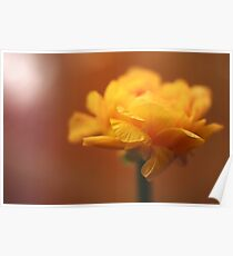 Soft focus of a yellow flower  Poster